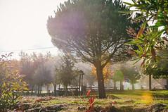 Romaria de Santa Eufémia de Penedono (Gail at Large | Image Legacy) Tags: 2018 peneladabeira portugal viseu gailatlargecom