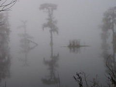 foggy-swamp-betty-berard (tanyapavlicapschyrembel) Tags: