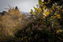 Autumn in Dimmuborgir (Christoph Wenzel) Tags: vulkan herbst sonyalpha6000 urlaub felsen island tamron18200mmf3563vc natur landschaft skútustaðir norðurlandeystra is
