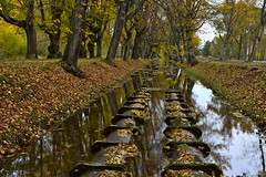 The Waterpipes Alley (kanyck (Thanx 4 0.5M views!)) Tags: 1835 d7200 nikon sigma autumn trees water channel reflections leaves ngc