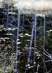 Tree Reflection (Bill Smith1) Tags: billsmithsphotography heyfsc kodakportra400 muskoka nlp2018 olympusom2n zuikolenses believeinfilm