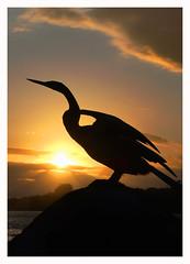Nambucca Heads (marcel.rodrigue) Tags: nambuccaheads midnorthcoast coffscoast sunset marcelrodrigue photography nature bird newsouthwales australia wildlife
