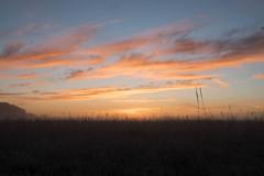 _DSC9500.jpg (thomasresch) Tags: sonneaufgang sun nordhaide panzerwiese nebel hartelholz sunrise sonne