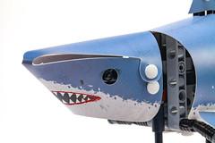 Forma Shark zoomed