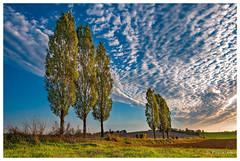 La tête dans les nuages (Pascale_seg) Tags: automne autumn sky nuage clouds route road peupliers countryscape country field campagne landscape paysage lorraine france grandest coucherdesoleil