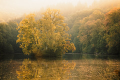 Büdingen September 2018 (janeway1973) Tags: büdingen hessen deutschland germany thiergartenweiher forest wald trees bäume lake see teich weiher pond early morning früh morgens scenery landschaft landscape