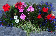 Anglesey Planter Floral Display July 8Th 2018 Sony HX60-V (mrd1xjr) Tags: anglesey planter floral display july 8th 2018 sony hx60v