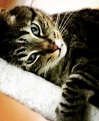(promaxeva) Tags: ilovemycat cata cats