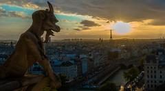 Chimère - Notre Dame de Paris (valecomte20) Tags: chimère notre dame de paris sunset water nikon