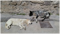 dogs.of.pompeii (Robertson the Bruce) Tags: pompeii italy dogs canine sleep heat street