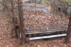 More Relics & Refugees (BennyPix) Tags: junkyard rust old classic vintage antique retro barkada wilmar ar drewcounty arkansas november 2015 © allrightsreserved unauthorizedusestrictlyprohibited allcommercialuseprohibited junk car auto automobile bennypix canon eos 50d chevy chevrolet