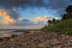 Beach Rocks Vultures (John Andersen (JPAndersen images)) Tags: mexico mayanriviera morning beach palms vultures clouds sunrise