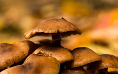 'Tis the Season' (Canadapt) Tags: mushrooms forest bokeh keefer canadapt