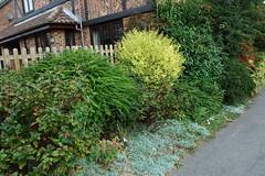 DSC_2688 (PeaTJay) Tags: nikond70s reading berkshire lowerearley outdoors nature gardens flowers plants trees bushes