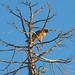 Gnarly perch