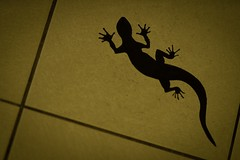 SHADOW (seaflanker1) Tags: shadow lizard sal135f18z sonnar sonnart135mmf18za carlzeiss zeiss α7ⅲ sony