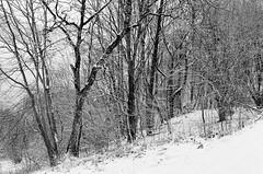 inverno (ma.ri_na) Tags: pellicola nikonfm2 bn bw film