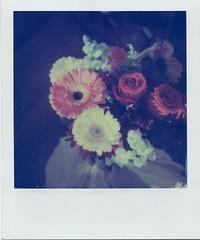 Birthday Flowers (James Ball) Tags: sx70 polaroid originals instant film expired