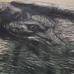 close up of wolf (squeezemonkey) Tags: vienna austria streetart mural wolf roa animal