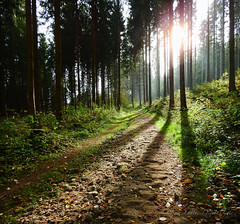 Sun is shining, the weather is sweet (DigitalLyte) Tags: mullerthaltrail route3 müllerthal luxembourg sun shadows silhouettes light woods forest trees path trail uphill stitched pano panoramic 2x 2xstackedhorizontal