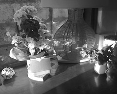 Domestic moments (YAZMDG (16,000 images)) Tags: noiretblanc nb blackandwhite monochrome monochromatic flowers