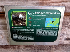 born_068 (OurTravelPics.com) Tags: born explanation göttingen minipig kasteelpark zoo