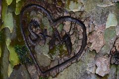 DSC_5840 (griecocathy) Tags: macro arbre tronc écorce coeur gravure mousse vert noir beige gris