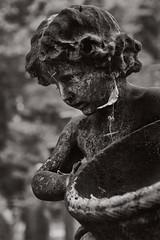 Natural Earring (pni) Tags: monochrome angel sculpture leaf grave brompton cemetery uk18 london uk england unitedkingdom pekkanikrus skrubu pni