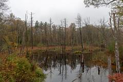 quabbinreservoir2018-122 (gtxjimmy) Tags: nikond7500 nikon d7500 quabbinreservoir newengland massachusetts belchertown ware autumn fall reservoir quabbin lakewallace