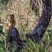 Safari Flickr (189 of 266)