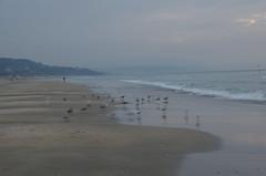JLF16373 (jlfaurie) Tags: deauville normandie normandy france francia dqaniel mariefrance louisette mechas mpmdf jlfr jlfaurie pentax k5ii plage playa beach seaside mer mar sea
