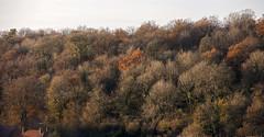 Autumn (JLM62380) Tags: autumn automne saison season arbres trees wood bois forest forêt nature feuilles leaves landscape