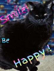 """She does not look it, but she is very Happy   """"smile on saturday"""" (marieschubert1) Tags: happywords black cat cute pet animal feline cuddly grin alert loving fun friend family member smileonsaturday"""
