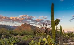 Late afternoon, Sabino Canyon (Photosuze) Tags: sabinocanyon tucson arizona sagauro cactus cacti sky clouds mountains landscape vegetation