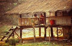 Chiang Khan, typical Thai farm-house (blauepics) Tags: thailand east chiang khan thai style stil farm bauernhof simple einfach poor arm farmhouse haus house building gebäude agriculture landwirtschaft hut shack bude hütte rural ländlich