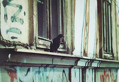 ... (www.facebook.com/mbpfotografija) Tags: birds bird pigeon citystreets city zagreb