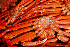 Mille pattes (patoche21) Tags: animal asie asiedelest crustace faune itoigawa japon nature naturemorte photographie voyages alimentation crabe grosplan proxy patrickbouchenard japan asia eastasia crab crustacean