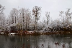 Today's Snowfall (Haytham M.) Tags: 1770 canada ontario texture tranquility serenity birds plant park forest tree wood sky lake snowfall beautiful november autumn fall day cold ducks pond water trees snow