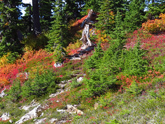 Autumn at Artist Point in WA (Landscapes in The West) Tags: artistpoint northcascadesnationalpark mountbakersnoqualmienationalforest washington pacificnorthwest landscape west artistridge autumn