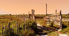"""Far South"" (Le.Patou) Tags: france provencealpescôte dazur bouchesdurhône camargue paysage campagne prairie ranch landscape countryside fz1000 grass"