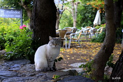 Gato de la Vall de Boi'' (slater665) Tags: cats gatos masotas lleida boi vall gato animal árbol jardin