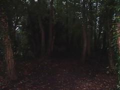Path through the gloom (Phil Gayton) Tags: gloom trail track path tree riverside walk totnes devon uk