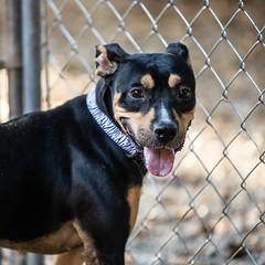 Pigtails13Oct201882.jpg (fredstrobel) Tags: dogs pawsatanta atlanta usa animals ga pets places pawsdogs decatur georgia unitedstates us