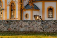 jesień (8 of 10) (Stach_Trach) Tags: sony a99ii autumn jesień sokólszczyzna ostrówek podlasie
