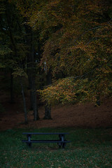 After A Busy Summer (Rind Photo) Tags: bench autumn atmosphere beautiful trees grass green isolated nikkor nikondf rindphoto clauschristoffersen
