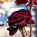 Rose in the harbor of Neos Marmaras