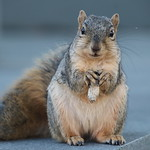 Squirrels in Ann Arbor at the University of Michigan - October 16th, 2018 thumbnail