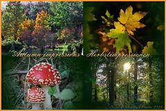 Herbstimpressionen - Autumn impressions (Noodles Photo) Tags: herbstimpressionen autumnimpressions collage pilze mushrooms leaves blätter forest wald farben colorful canoneos7d ef24105mmf4lisusm deutschland germany nrw northrhinewestphalia nordrheinwestfalen