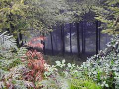 Ventana al bosque (josuneetxebarriaesparta) Tags: pagadia leihoa natura hayedo ventana naturaleza trees zuhaitzak arboles vegetación basquecountry euskadi paísvasco basoa