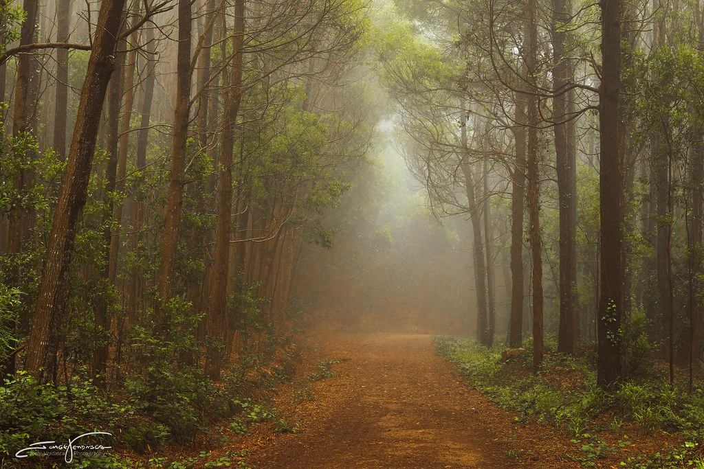 The World's Best Photos of mist and woodland - Flickr Hive ...